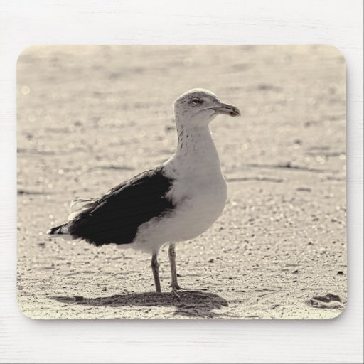 Photo of Seagull on Coney Island Beach Mouse Pads