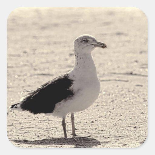Photo of Seagull on Coney Island Beach Stickers