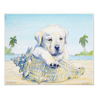 Photo Print,  Golden Lab Puppy