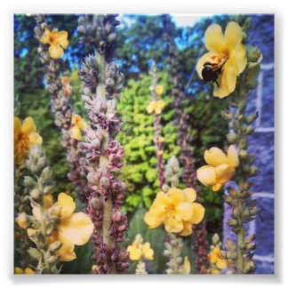 photo print of a bubble bee in a wild flower