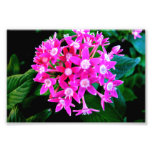 Photo Print Of Beautiful Pink Flowers