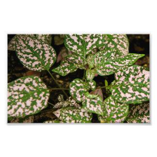 Photo Print - Pink Polka Dot Plant