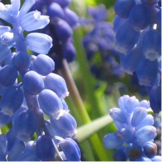 Photo Sculpture - Grape Hyacinth