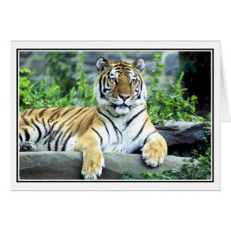 Photo Siberian tiger Note Card