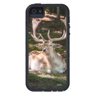 photo stag under wood iPhone 5 covers
