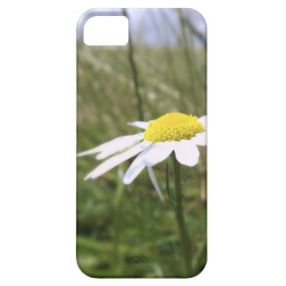 Photo taken by CarlyLouPhotography in Lincolnshire iPhone 5 Cases