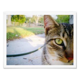 "Photo Un-Named Tabby Cat ""Wedding"""