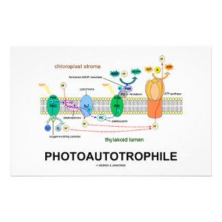 Photoautotrophile Photosynthesis Stationery