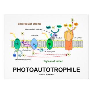 Photoautrophile (Photosynthesis) Flyer Design