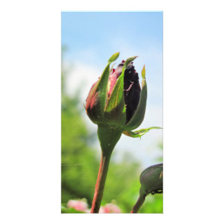 Photocard ROSE with cover Photo Greeting Card
