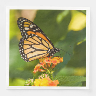 photograph of a butterfly on a flower paper serviettes