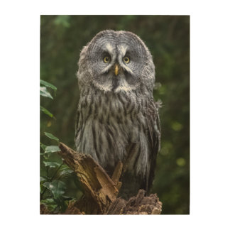 photograph of a great grey owl wood wall art