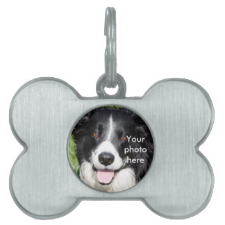 Photograph of a happy dog pet tag