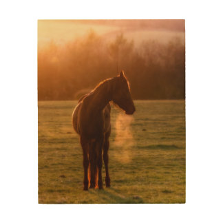 Photograph of a Horse in the sunset light Wood Print
