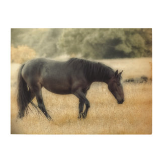 Photograph of a horse with soft focus wood wall art