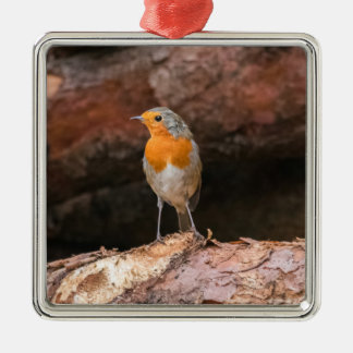 Photograph of a robin sitting on logs christmas ornament