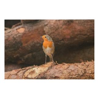 Photograph of a robin sitting on logs wood wall art