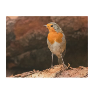 Photograph of a robin sitting on logs wood wall decor