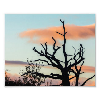 Photograph of a tree silhouette  in Lanchester