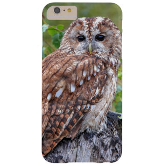 Photograph of an owl barely there iPhone 6 plus case