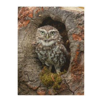 Photograph Owl in a tree hole Wood Wall Art