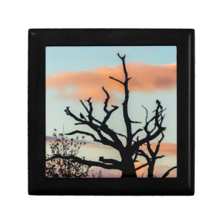 Photograph silhouette tree in the sunset gift box
