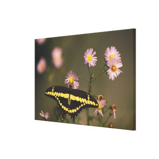 Photographed on a sunny day with filtered light. canvas print