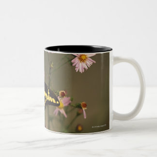 Photographed on a sunny day with filtered light. Two-Tone coffee mug
