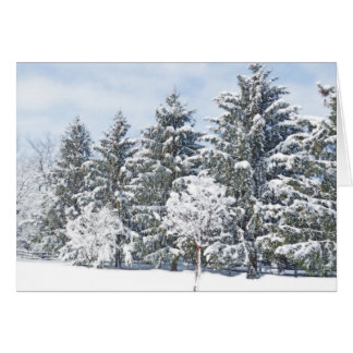 PHOTOGRAPHIC GREETING CARD/EVERGREENS IN SNOW GREETING CARD