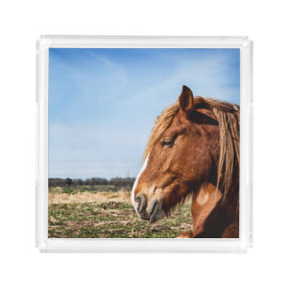 Photographic Horse Serving Tray