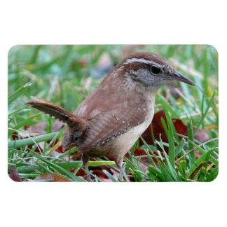 Photographs : birds - magnets