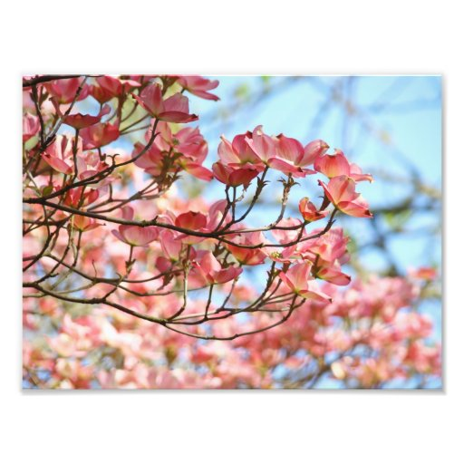 Photography art prints Pink Dogwood Floral Flowers Photo Art