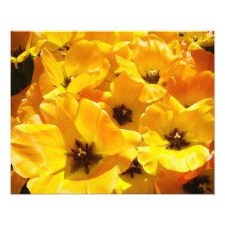 Photography art prints Yellow Tulip Flowers Floral Art Photo