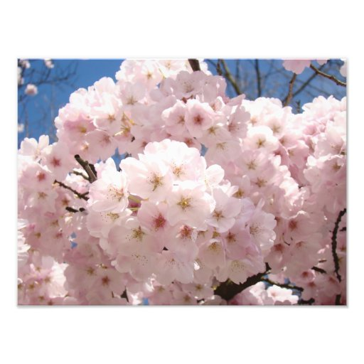 Photography Fine Art Prints Pink Tree Blossoms Photographic Print