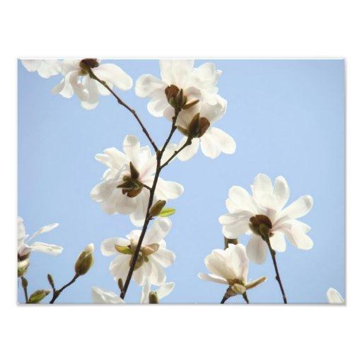 Photography Floral art prints Magnolia Flowers Photographic Print