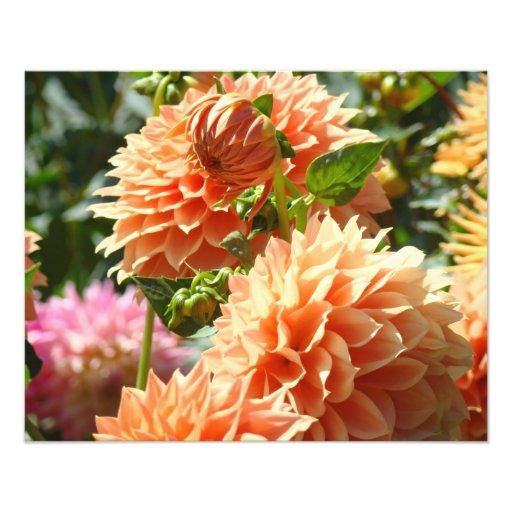 Photography Floral art prints Orange Dahlia Flower Art Photo