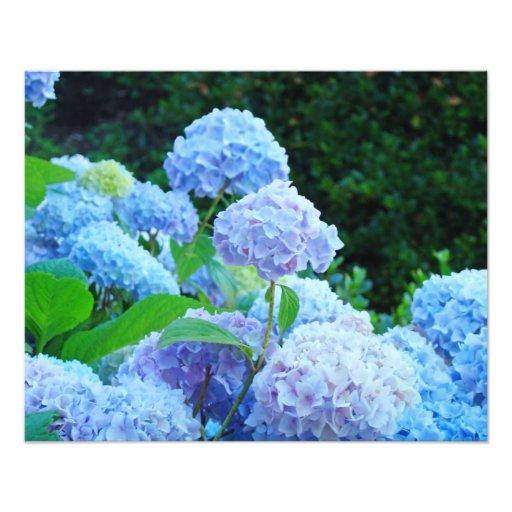 Photography Floral Decorative art prints Hydrangea Art Photo