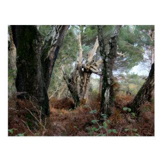 Photography landscape of cork oaks in Doñana Postcard