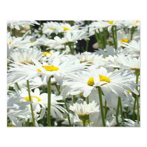 Photography nature Art Prints Daisy Flowers Unique Photographic Print