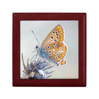 Photography of butterfly on flower of the desert small square gift box