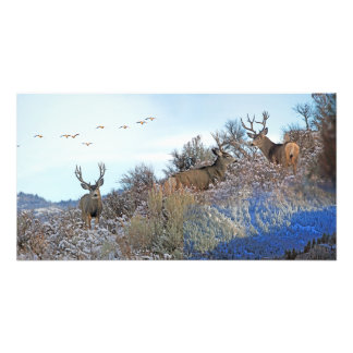 Photography photoshop wildlife art photo print
