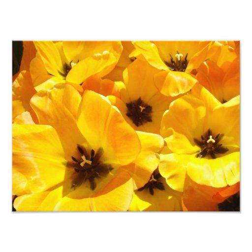 Photography Tulip Flowers art prints Framed Floral Photo Art