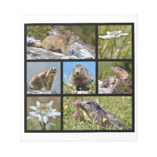 Photos mosaic Alpine marmots and edelweiss Notepads