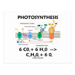 Photosynthesis (Carbon Dioxide + Water)