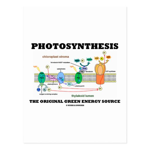 Photosynthesis The Original Green Energy Source Post Card