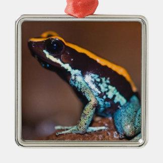 Phyllobates vittatus, a poison arrow frog christmas ornament