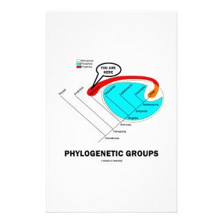 Phylogenetic Groups (Mammalia) You Are Here Custom Stationery