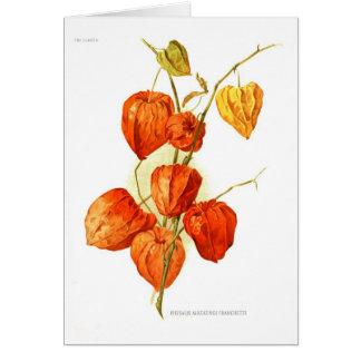 Physalis alkekengi franchetti greeting card