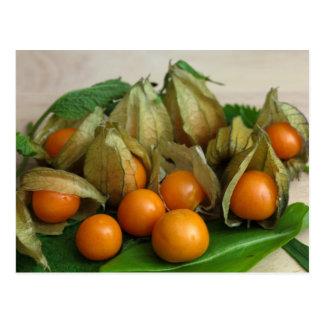 Physalis Fruits Postcard