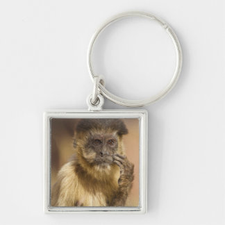 Piaui, Brazil, Brown Capuchin, Cebus apella, Key Ring